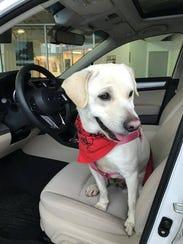 Snow White loves car rides.