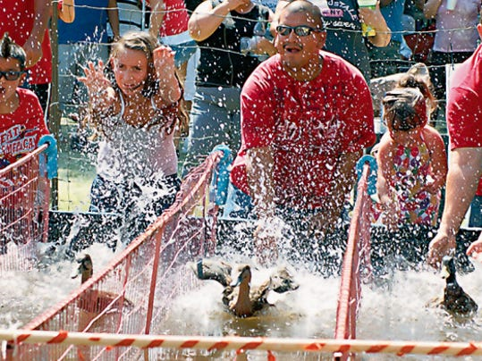 Duck race fans on the wet track experience all the thrills and spills of competitive wing-to-wing racing.