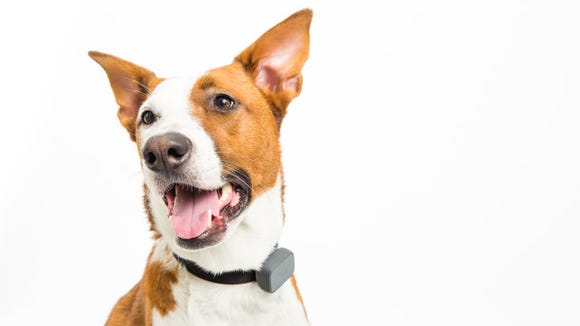 Track your pooch with a GPS-enabled collar.