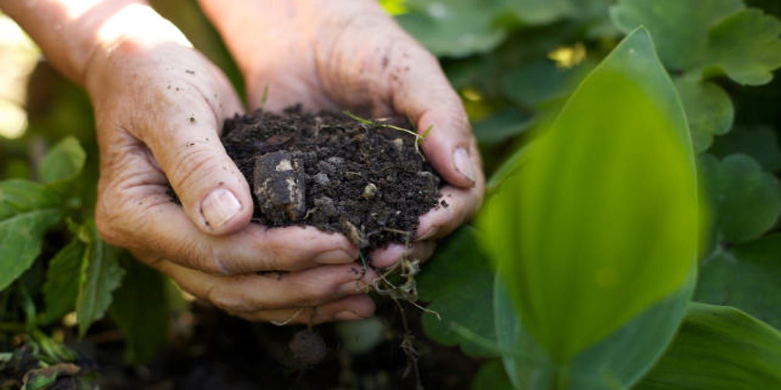 Save those coffee grounds to make your plants grow
