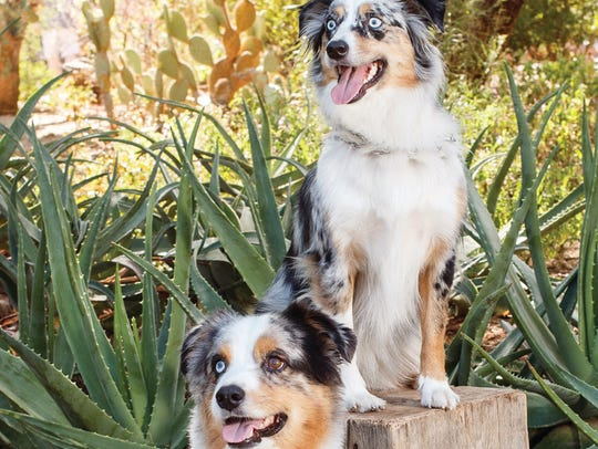 During the Desert Botanical Garden's Dogs' Day in the
