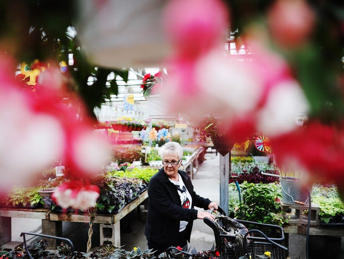 "Dorthy Krell browses through the Cliff Avenue Greenhouse on Wednesday, April 30, 2014, in Sioux Falls. ""I have a garage full of flowers patiently waiting,"" said Krell, who explained she wasn't very patient when it came to flowers. (Joe Ahlquist / Argus Leader)"