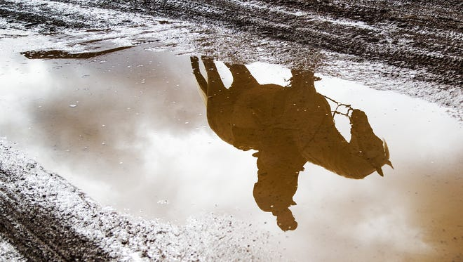 After rainfall on Thursday morning, a horse and rider are reflected in muddy water at the 63rd Annual Scottsdale Arabian Horse Show at WestWorld, Thursday, February 15, 2018.