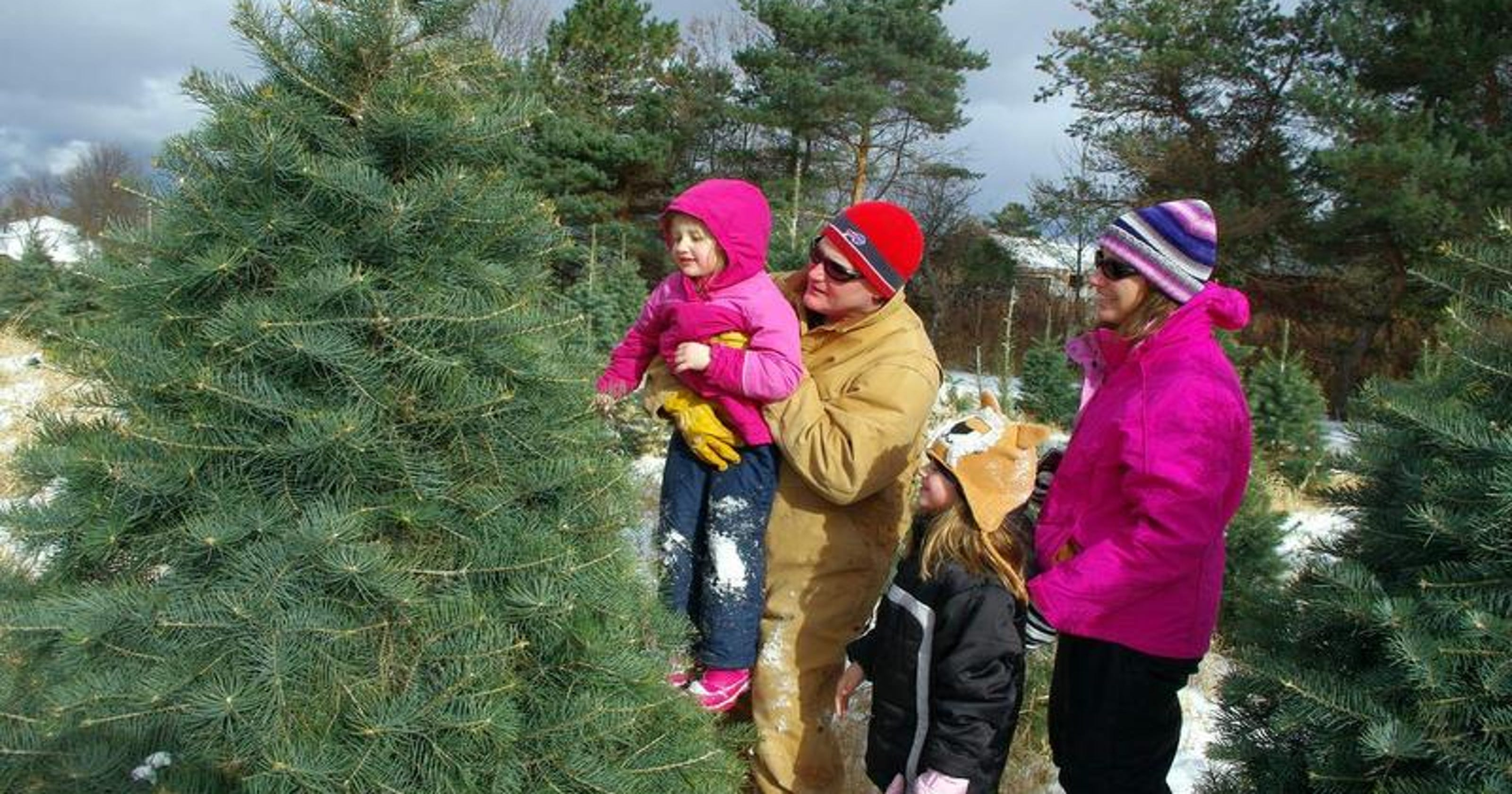 Cut Your Own Christmas Tree Near Me.Where To Cut Your Own Christmas Tree In Rochester