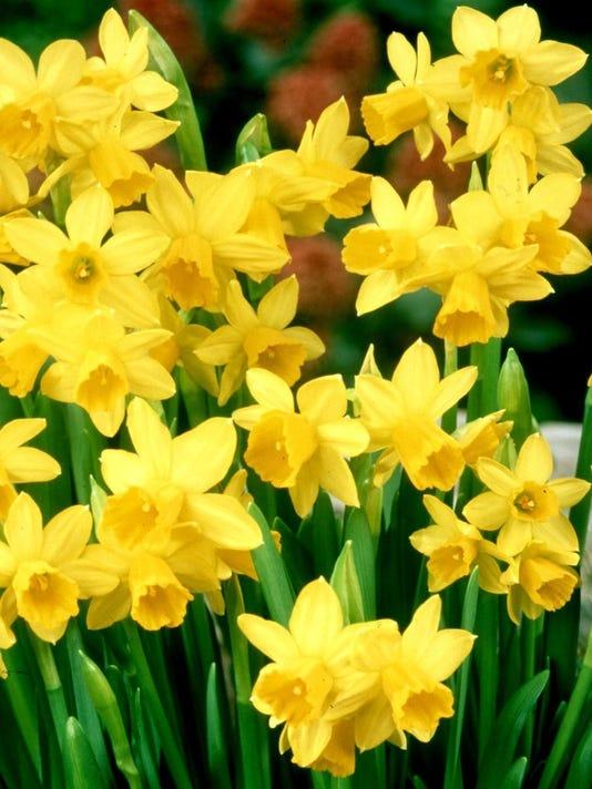 635962254673709071-flowers.jpg