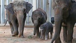 In 2015 file photo, Asian elephant Asha, left, walks