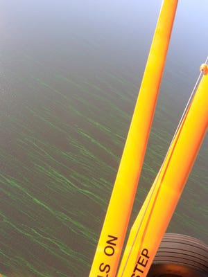 Strands of algae can be seen Tuesday morning on Lake Okeechobee from a plane about 1,000 feet above the water.
