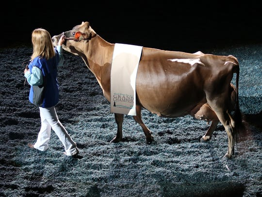 Musqie Iatola Martha-ET, exhibited by Milksource Genetics of Kaukauna, enters the colesium during the Parade of Champions during the World Dairy Expo on Oct. 7 at the Alliant Energy Center in Madison. Martha was chosen as the 2017 Reserve Supreme Champion.