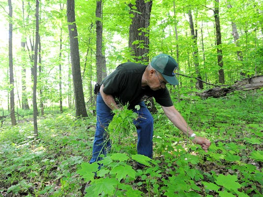 Invasive plants, parks, ODNR, environment,