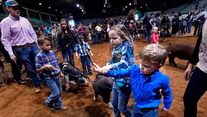 Micah Maberry, 6, leads her brother Kelton, 4, as together they chase their pig during the Honorary, or Pee Wee, Showmanship contest Jan. 20 at Sweetwater's Nolan County Coliseum. The event was held for children in second grade and younger as an introduction to the competitive world of showing livestock. The Nolan County Junior Livestock Show was held Jan. 18-20.
