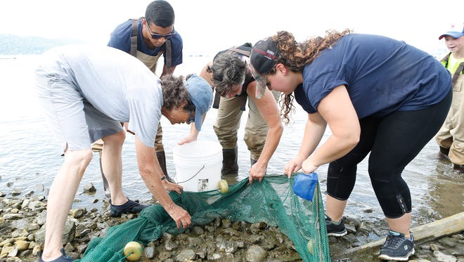 The Lamont-Doherty Earth Observatory took part in the Great Hudson River Estuary Fish Count at the pier in Piermont on Saturday, August 13, 2016.