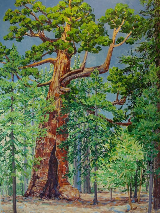 The-Grizzley-Tree---Mariposa-Grove---Yosemite-National-Park