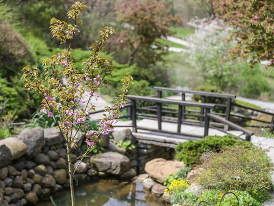 A tree blooms in the ravine garden at the Indianapolis
