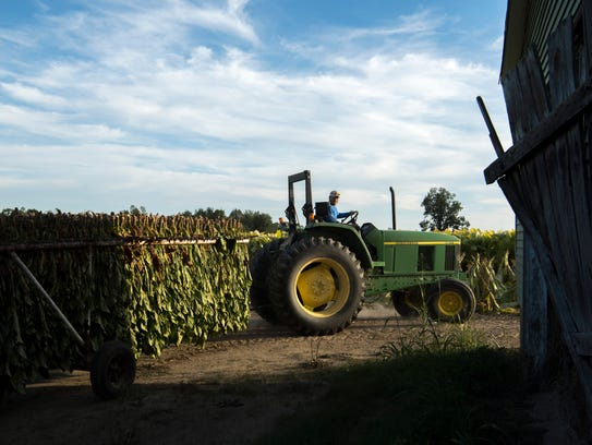 Heath Thurby maneuvers another load of dark tobacco
