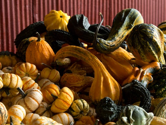 Squash and gourds are piled high for sale at Goebel