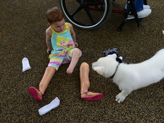 Sapphyre Johnson, 3, who has two prosthetic feet, meets her new dog, Lt. Dan at Shriner's Hospital for Children on Monday. Lt. Dan was born missing one of his front paws.