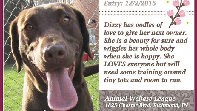 Dizzy is available for adoption at Animal Welfare League.