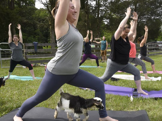 Stephanie Lefler shares a yogo mat with a Pygmy goat