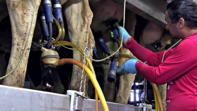 The dairies that lost their contracts found new buyers for nearly all of their milk, but an oversupply of milk still looms over the industry as a whole.