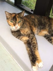 Anna, a green-eyed beauty, misses her deceased owner.