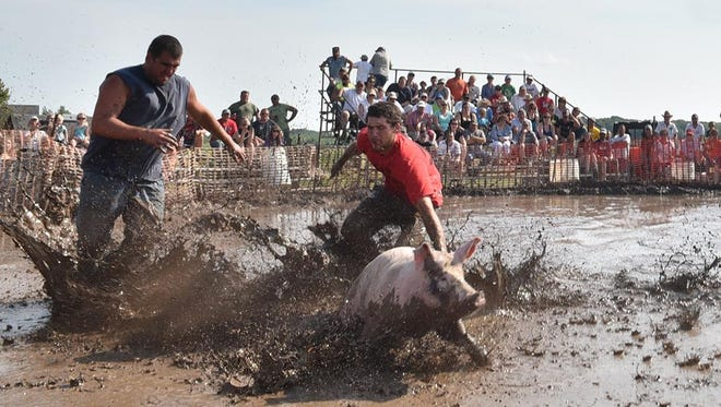 Muddy team members try to track down a muddy pig during the traditional mud pig wrestling competition at a previous Valmy Thresheree. A group has launched an online petition to stop the event.
