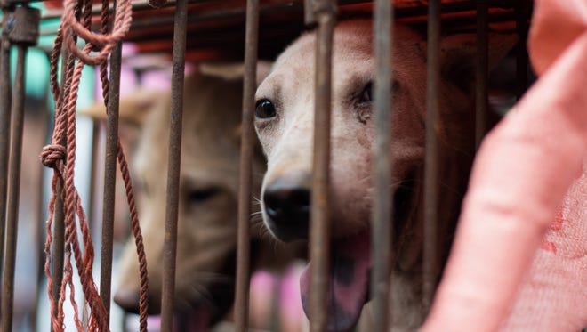 Photos from the Yulin Dog Festival in China.