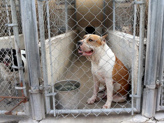 A dog barks in its kennel Thursday, July 13, 2017,