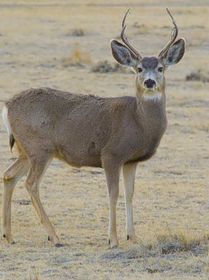 Desert Valley Times file photo Mule deer are one of the species for which second draw tags are available. Wikipedia Mule deer are one of the species for which a dream tag is available.