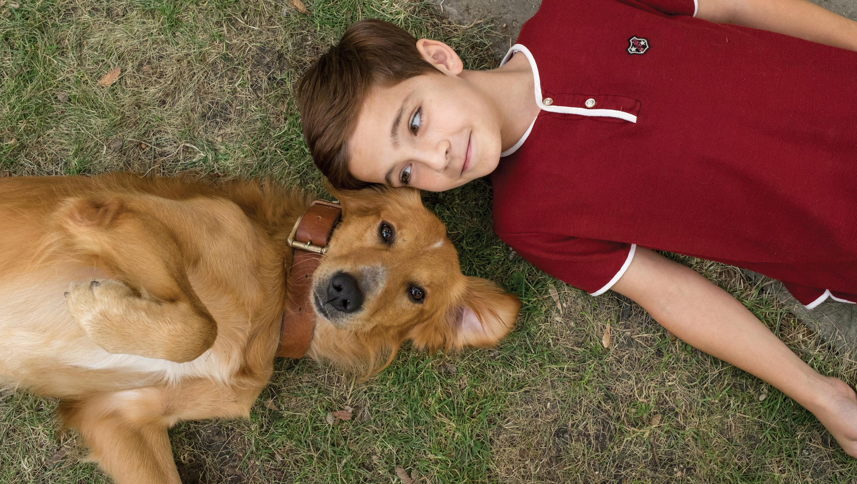 Review A Dog S Purpose