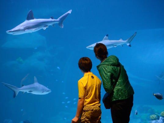 Aquarium-Utah (4)