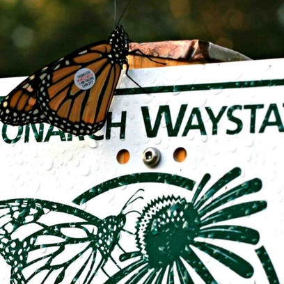 River Hills to create Monarch butterfly gardens