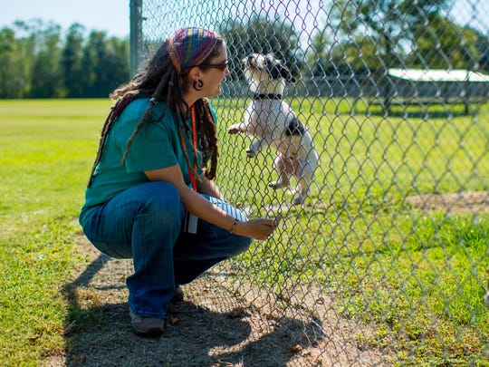 Executive director Carley Faughn is greeted by a dog at Acadiana Animal Aid, formerly known as Lafayette Animal Aid, in Carencro, La., Wednesday, Sept. 23, 2015.