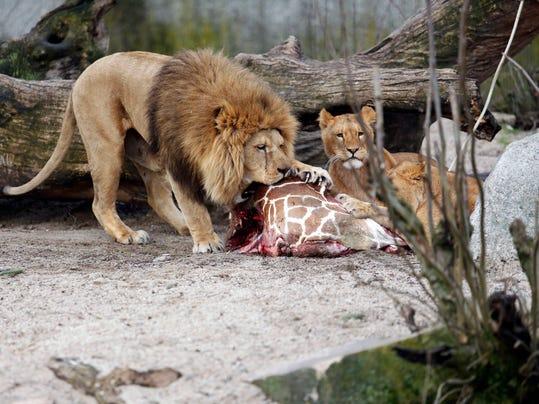 AP_Denmark_Lions_Killed