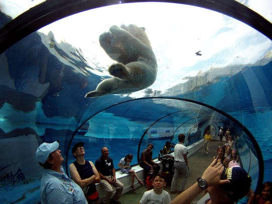At the Arctic Ring of Life at the Detroit Zoo visitors watch in the cool environment of the underwater Polar Bear display as a bear plays with and eat a large block of ice filled with various kinds of fruit, in this 2011 file photo.