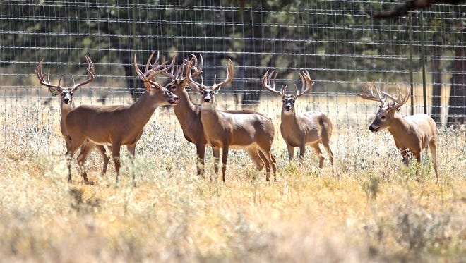 Most Texas cases of CWD have been associated with deer breeding facilities.