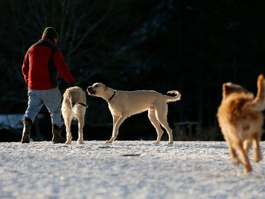 Dogs and their owners enjoyed the warm weather while playing at the Ithaca Dog Park on Wednesday, January 3, 2018.