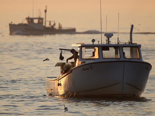 In this Monday, Aug. 17, 2015, photo, an undersized lobster is flipped back into the ocean, off Kennebunkport, Maine. The lobster population in the Gulf of Maine and Georges Bank, the rich fishing grounds off eastern Canada, has reached record highs. In southern New England, the catch has declined. Scientists attribute the drop in large part to the warming of the ocean. (AP Photo/Robert F. Bukaty)