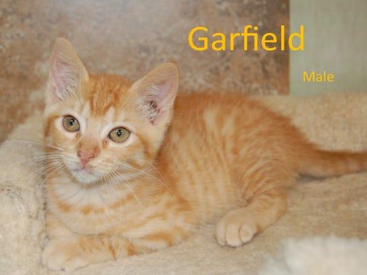 636645040385923524-Kittens-3.jpg