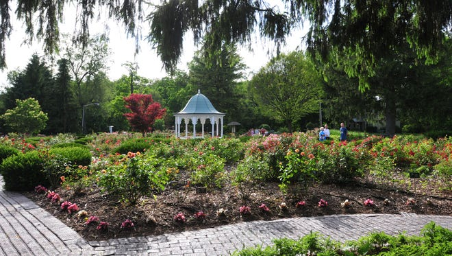 The Richmond Rose Garden along National Road East is visited by guests.