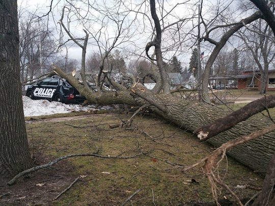 A tree damaged three Antigo squad cars on March 7, 2017.