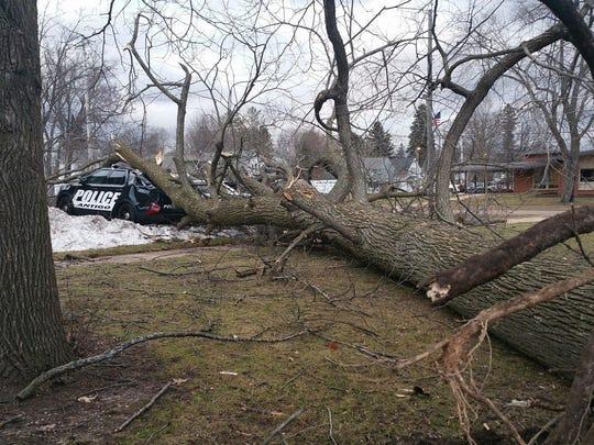 A tree damaged three Antigo squad cars on March 7,