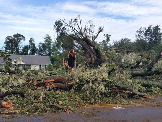 Trees damages by Sunday night's storms are seen Monday, July 24, in Kent Island.