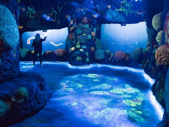 Night on the coral reef is part of the National Geographic