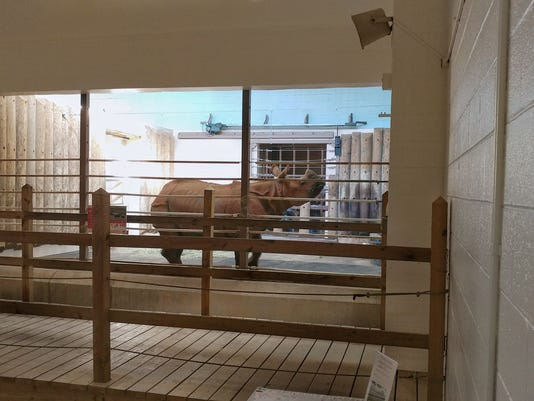 636473970796175305-rupert-the-rhino.jpg