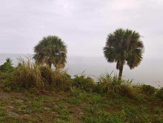 Fog descends over the Indian River