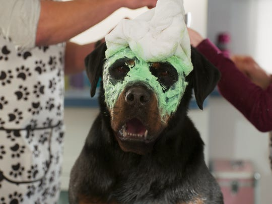 """Max is pampered in """"Show Dogs."""""""