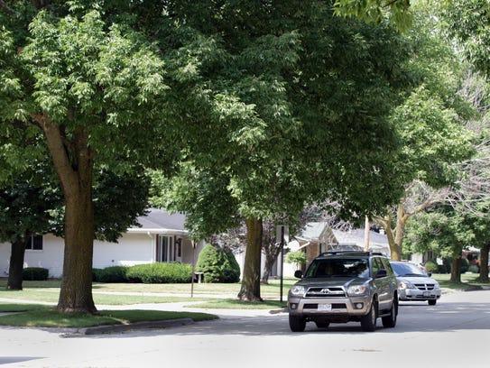 Ash trees line N. 18th Street near Washington Avenue