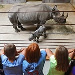 Photos: New eastern black rhinoceros calf  at the Great Plains Zoo