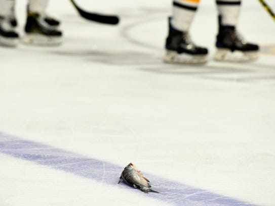 A catfish rests on the ice near some of the Penguins