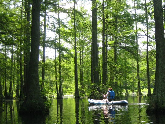 A kayaker glides through the wetland forest of Trap Pond State Park.